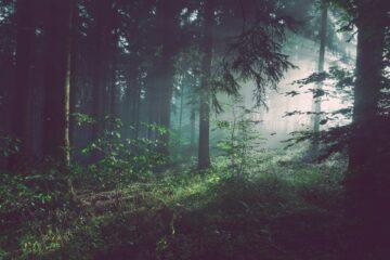 środowisko naturalne